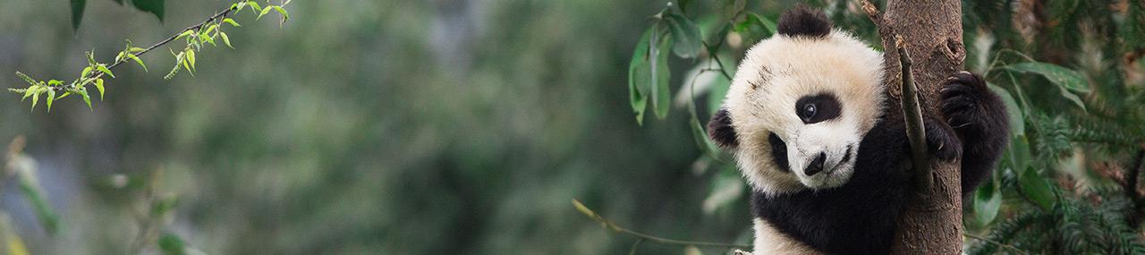 Biodiversité: le WWF montre la voie à suivre
