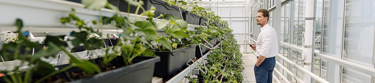 Vers une chaîne agroalimentaire durable